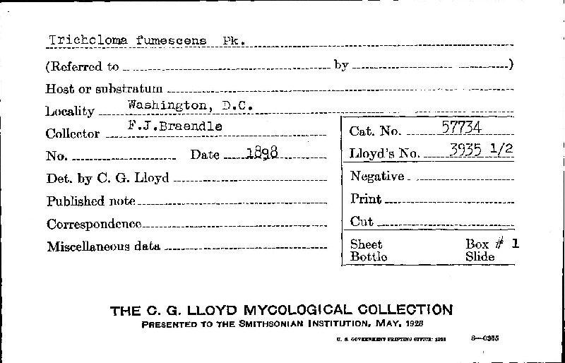 Tricholoma fumescens image