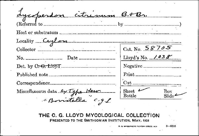 Lycoperdon citrinum image