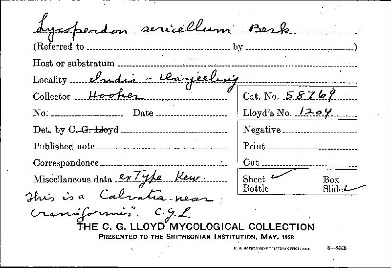 Lycoperdon sericellum image