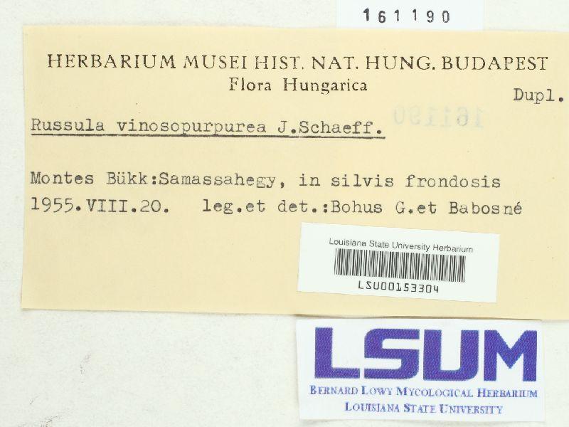 Russula vinosopurpurea image