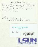 Trichaptum perrottetii image