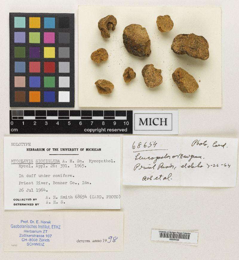 Mycolevis siccigleba image