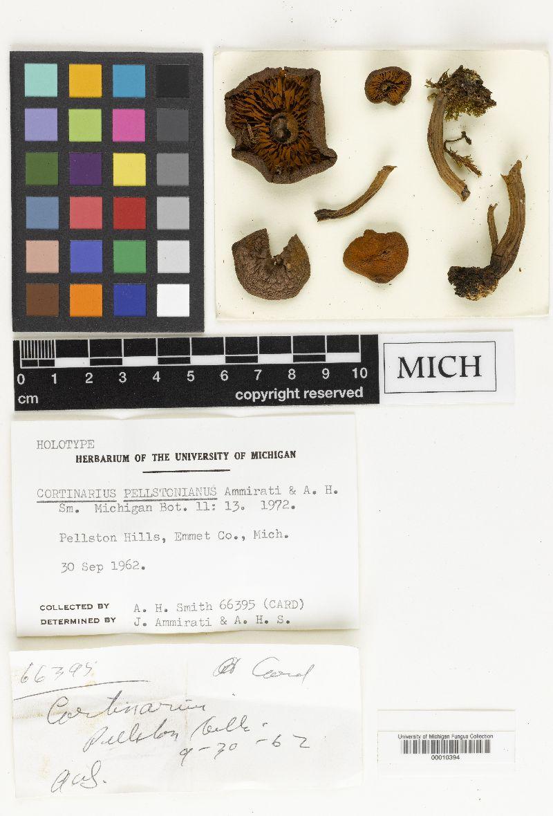 Cortinarius pellstonianus image
