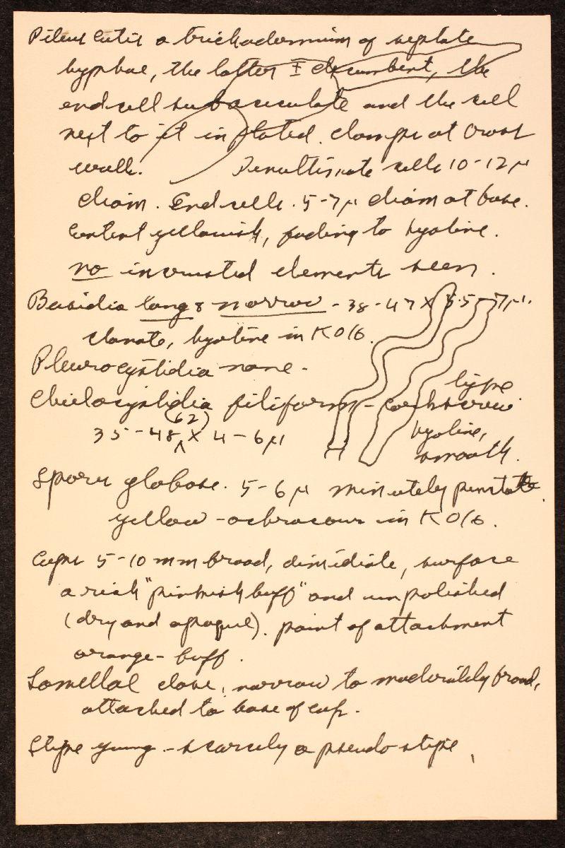 Crepidotus flexuosus image