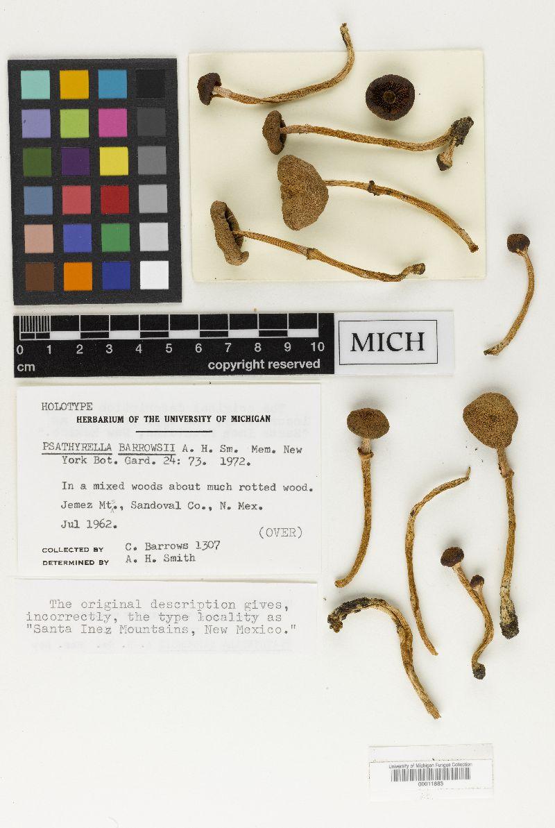 Psathyrella barrowsii image