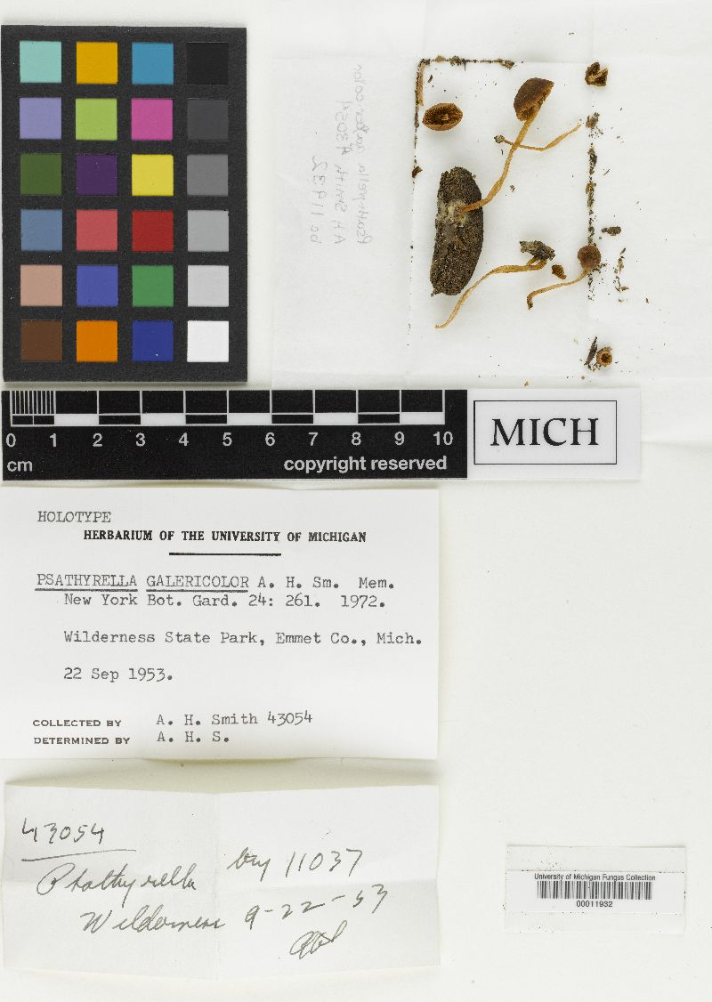 Psathyrella galericolor image