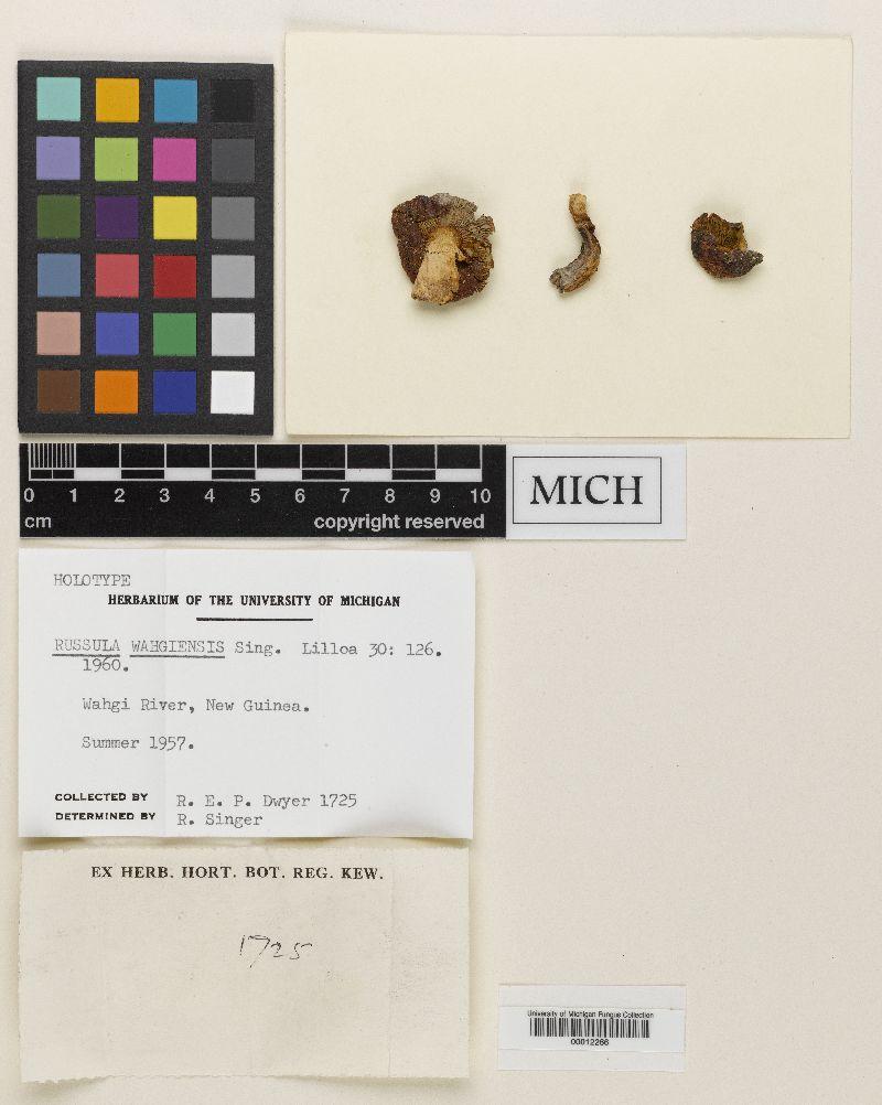 Russula wahgiensis image