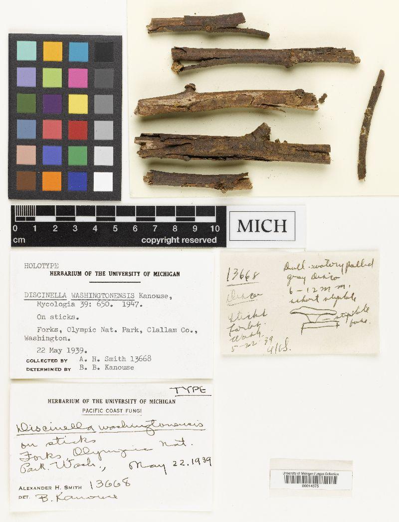 Discinella washingtonensis image