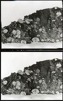 Crepidotus villosus image