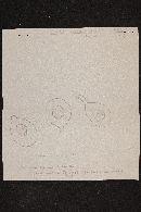 Clitocybe hydrogramma image
