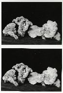 Sarcodon stereosarcinon image