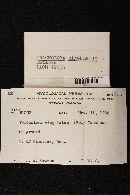 Tricholoma cingulatum image