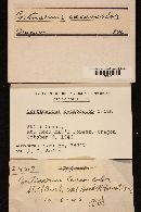 Cortinarius cacaocolor image