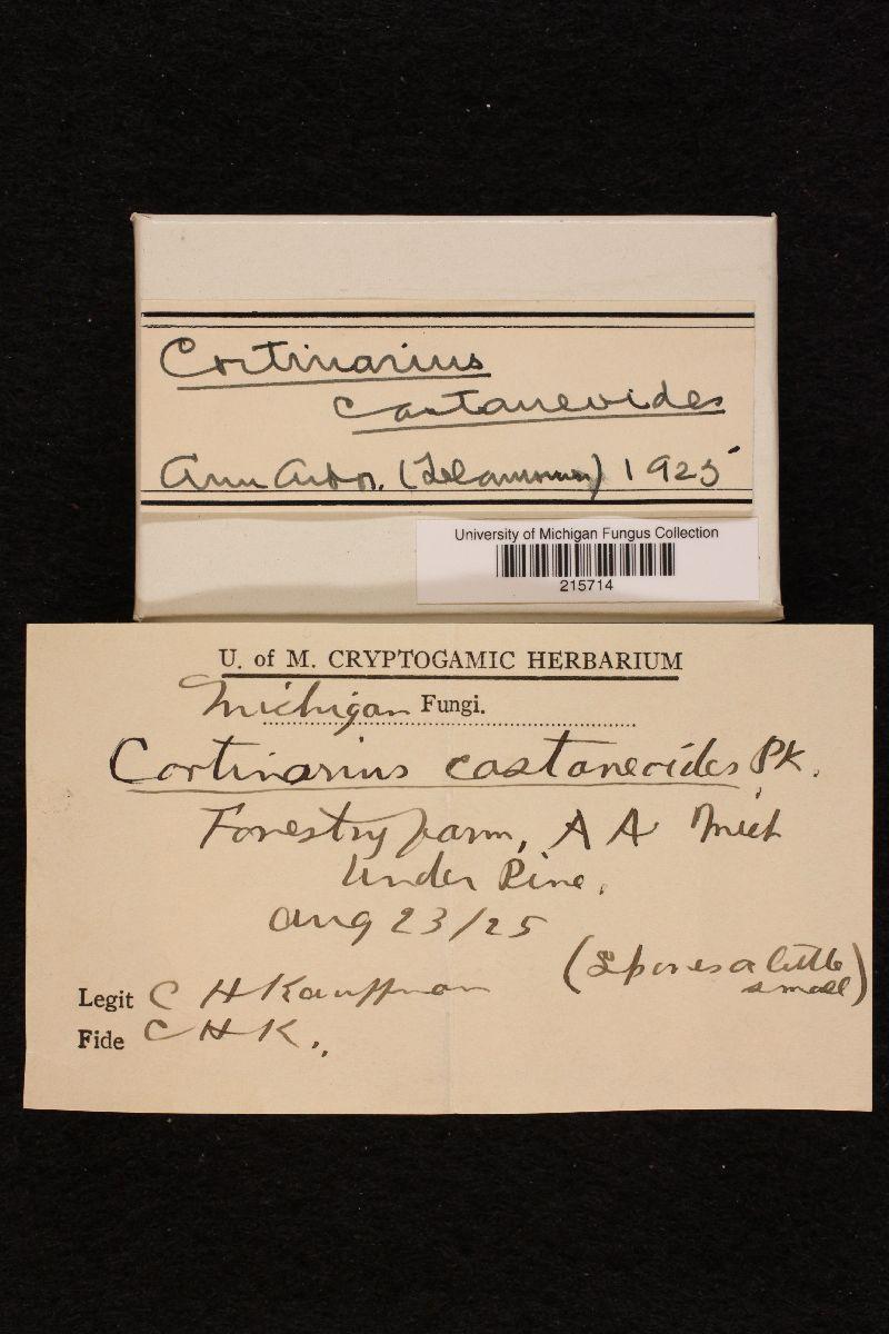 Cortinarius castaneoides image