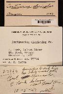 Cortinarius claricolor image