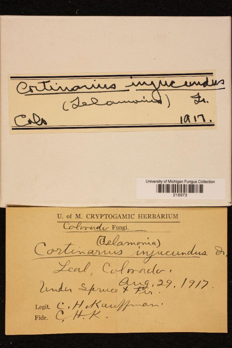 Cortinarius injucundus image