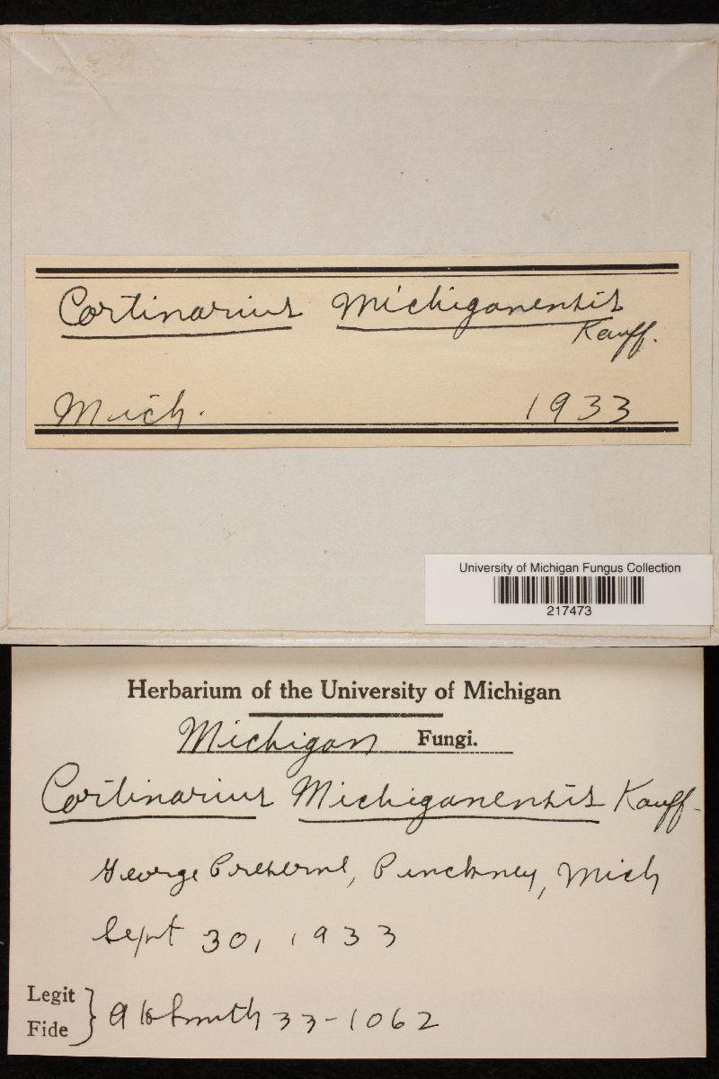 Cortinarius michiganensis image