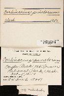 Cortinarius pinetorum image