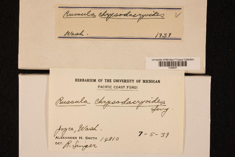 Russula chrysodacryoides image
