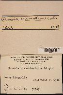 Russula crassotunicata image
