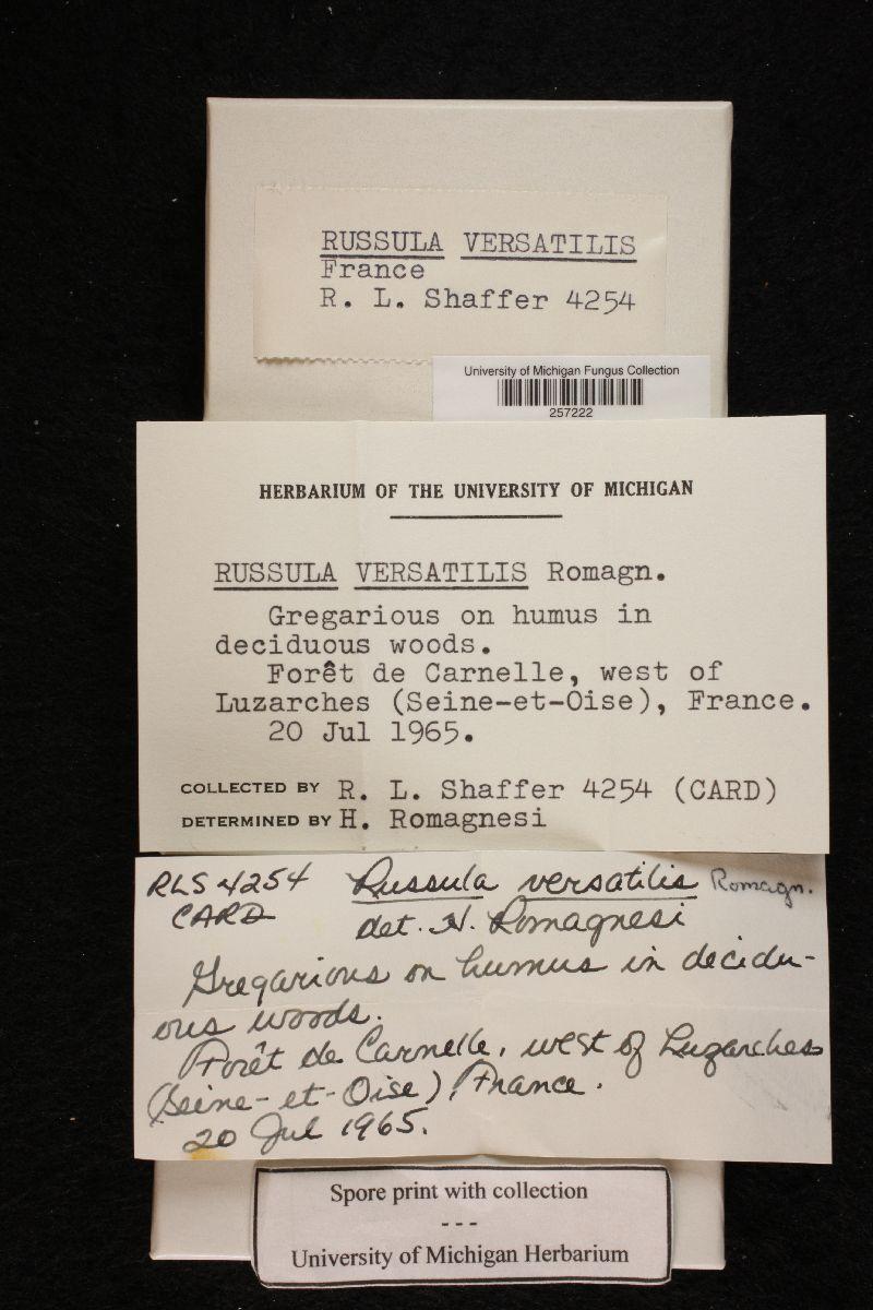 Russula versatilis image