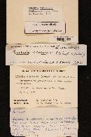 Russula virescens image