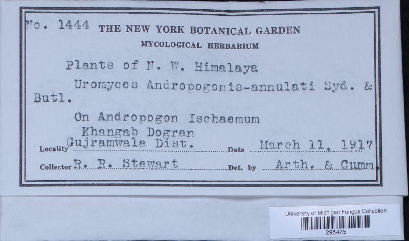 Uromyces andropogonis-annulati image