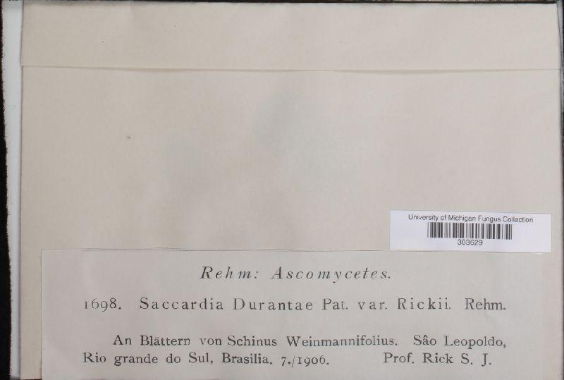 Saccardia durantae var. rickii image