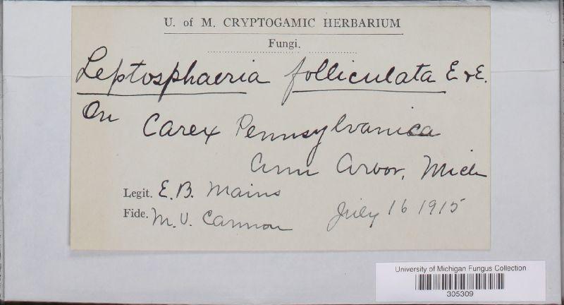 Leptosphaeria folliculata image