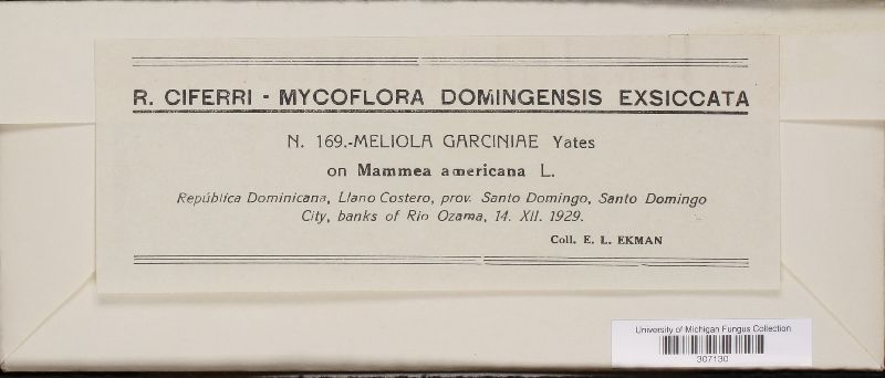Meliola garciniae image