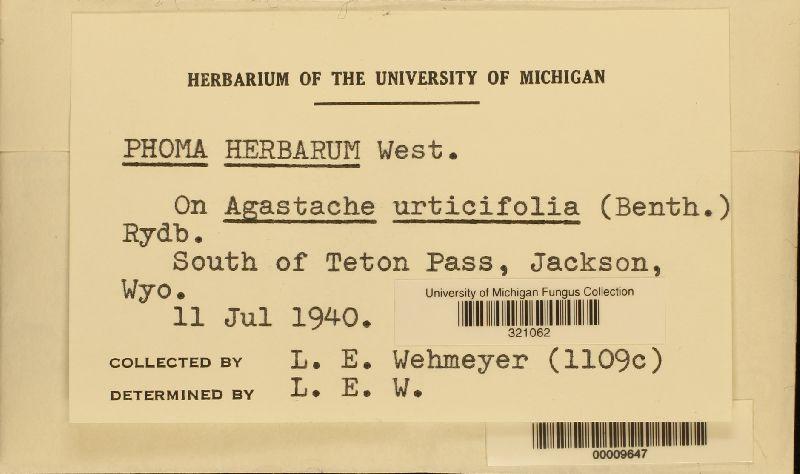 Phoma herbicola image
