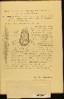 Septoria oleandrina image