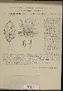 Ramularia alaterni image