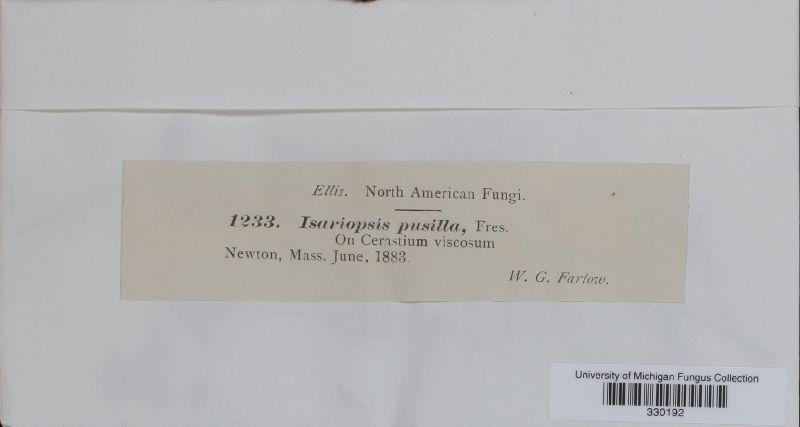 Isariopsis pusilla image
