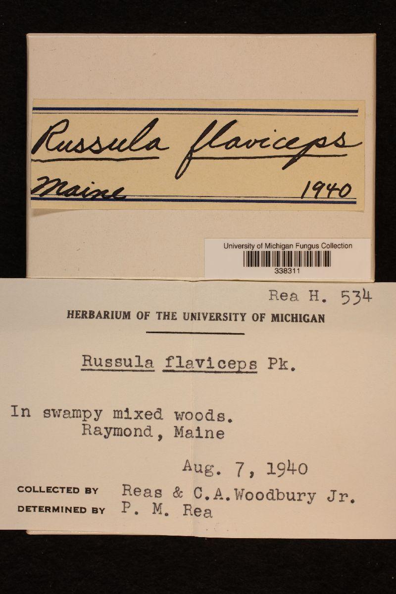Russula flaviceps image