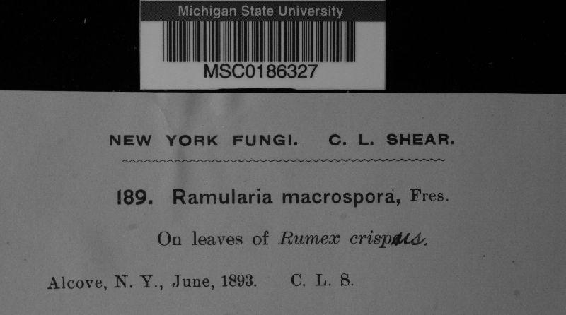 Ramularia image