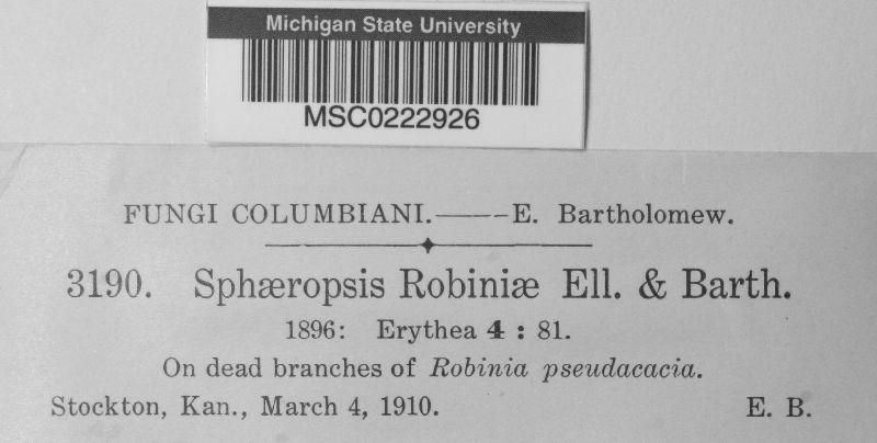 Sphaerella robiniae image