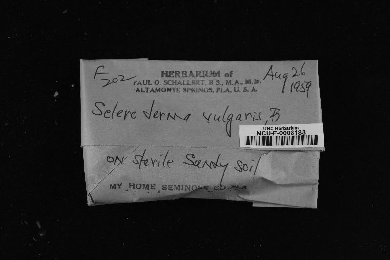 Scleroderma vulgaris image