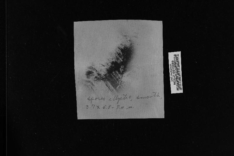 Pholiota johnsoniana image