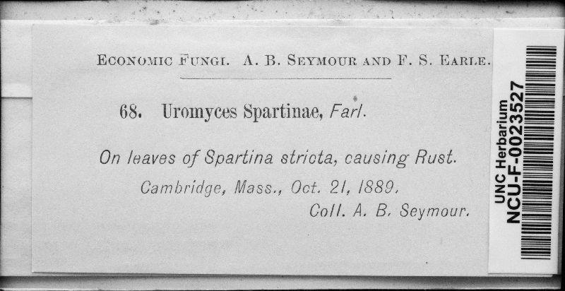 Uromyces spartinae image