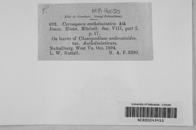 Cercospora anthelmintica image