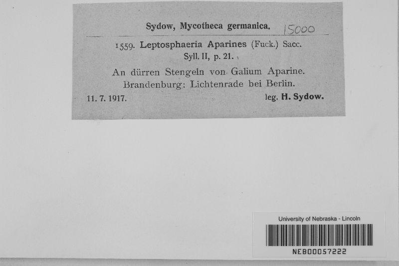 Leptosphaeria aparines image