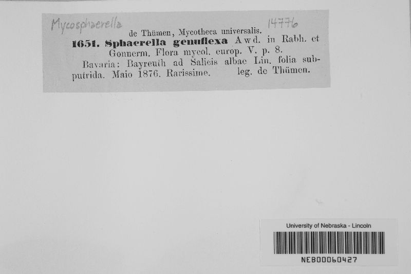 Mycosphaerella genuflexa image