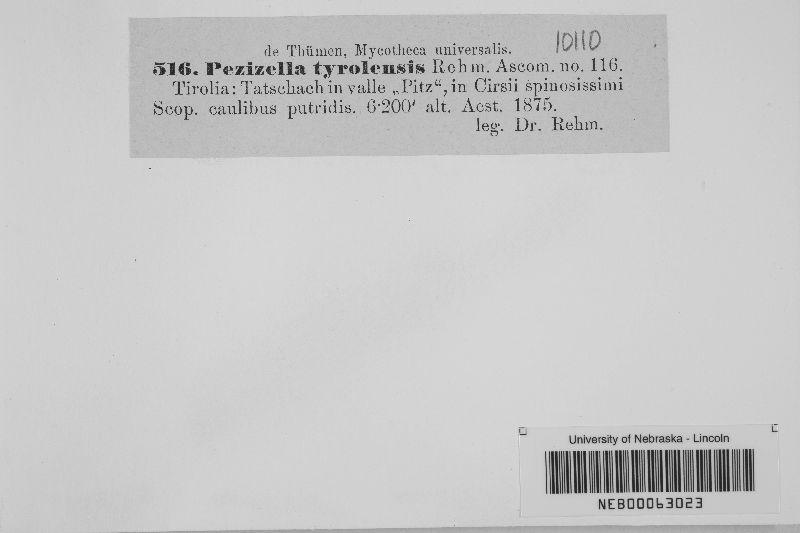 Pezizella tyrolensis image