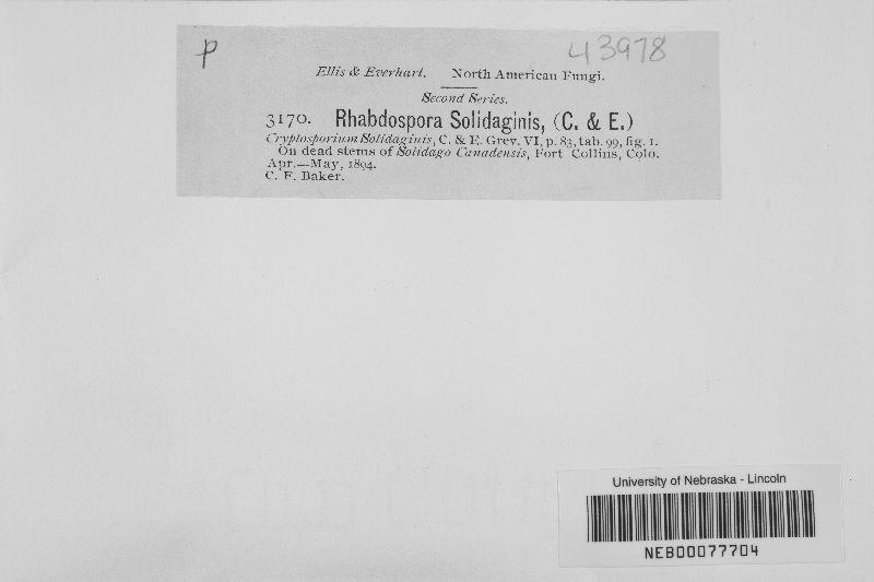 Rhabdospora image