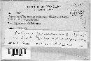 Balansia cyperacearum image