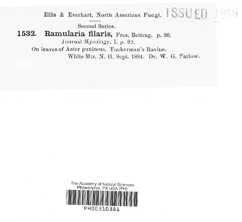 Ramularia filaris image
