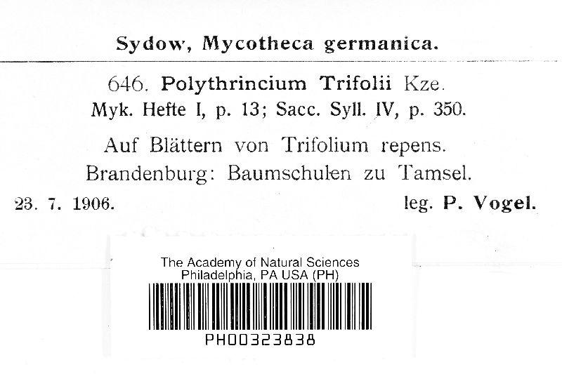 Cymadothea image