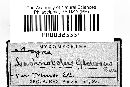 Arcyria globosa image