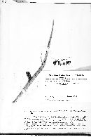 Image of Uredo occulta